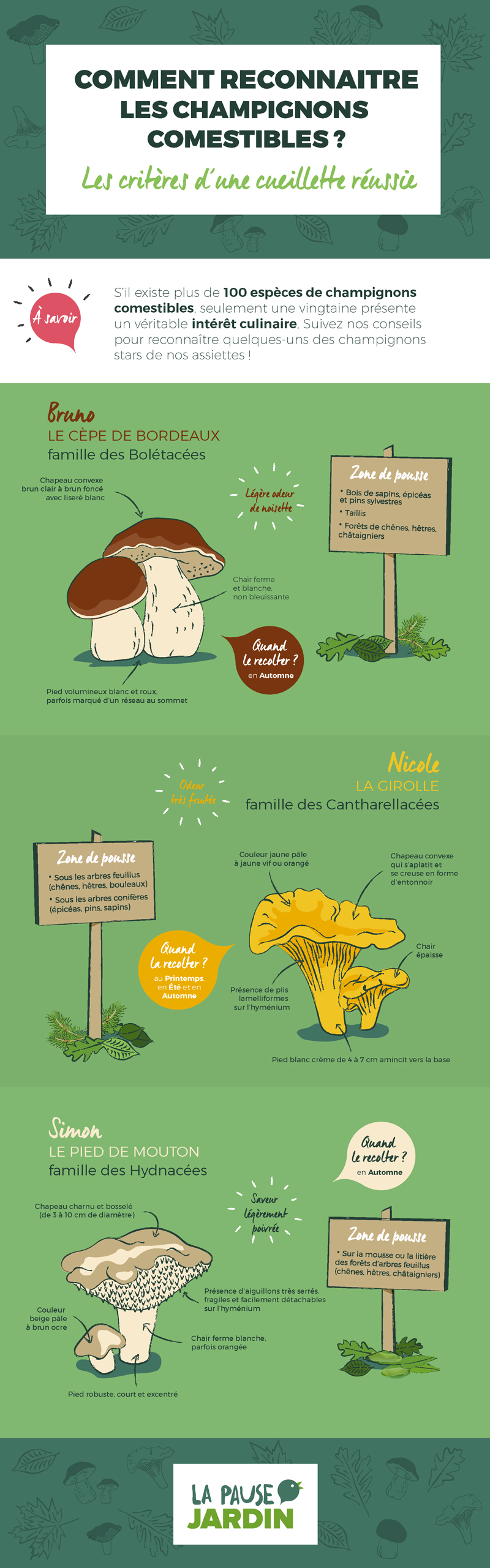 graphisme-infographie-champignons-bycamille