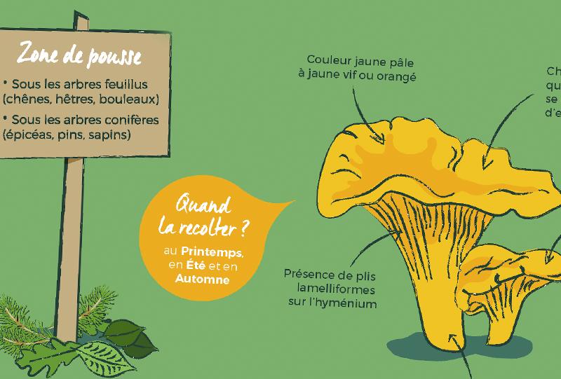 vignette-la-pause-jardin-champignons