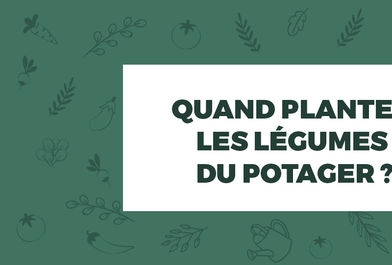 graphisme-infographie-lapausejardin-bycamille